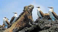 Celebrity nimmt Galapagos-Reisen wieder auf