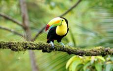 Costa Rica erleichtert Einreise für Geimpfte